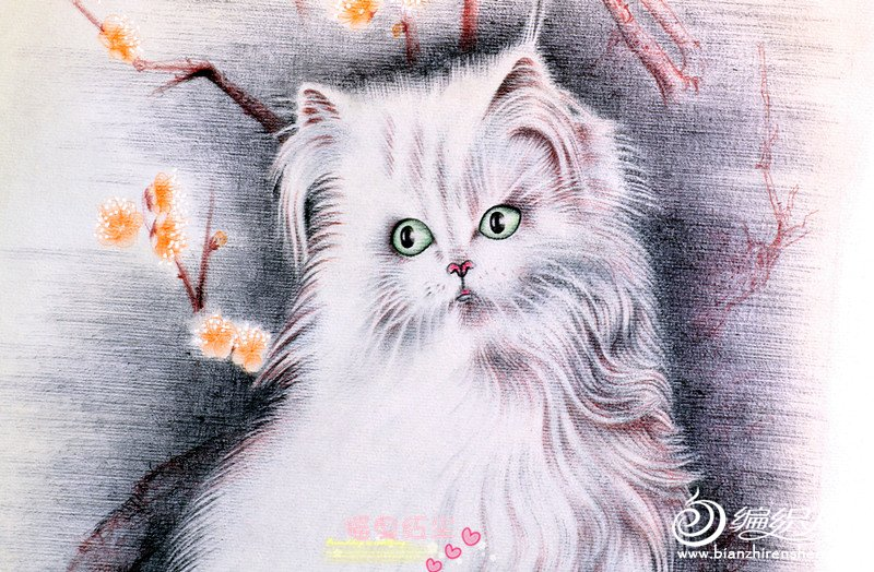 猫4_副本.jpg