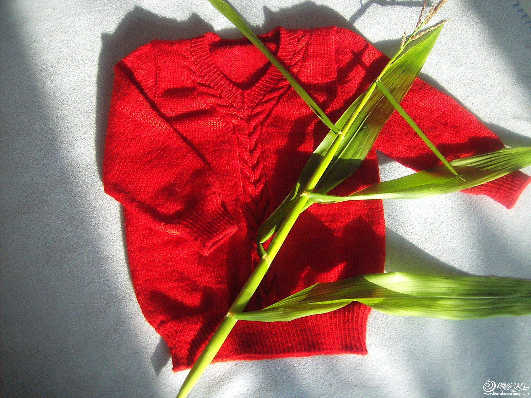 奶奶种的玉米,今天早上不小心弄断了,纪念下