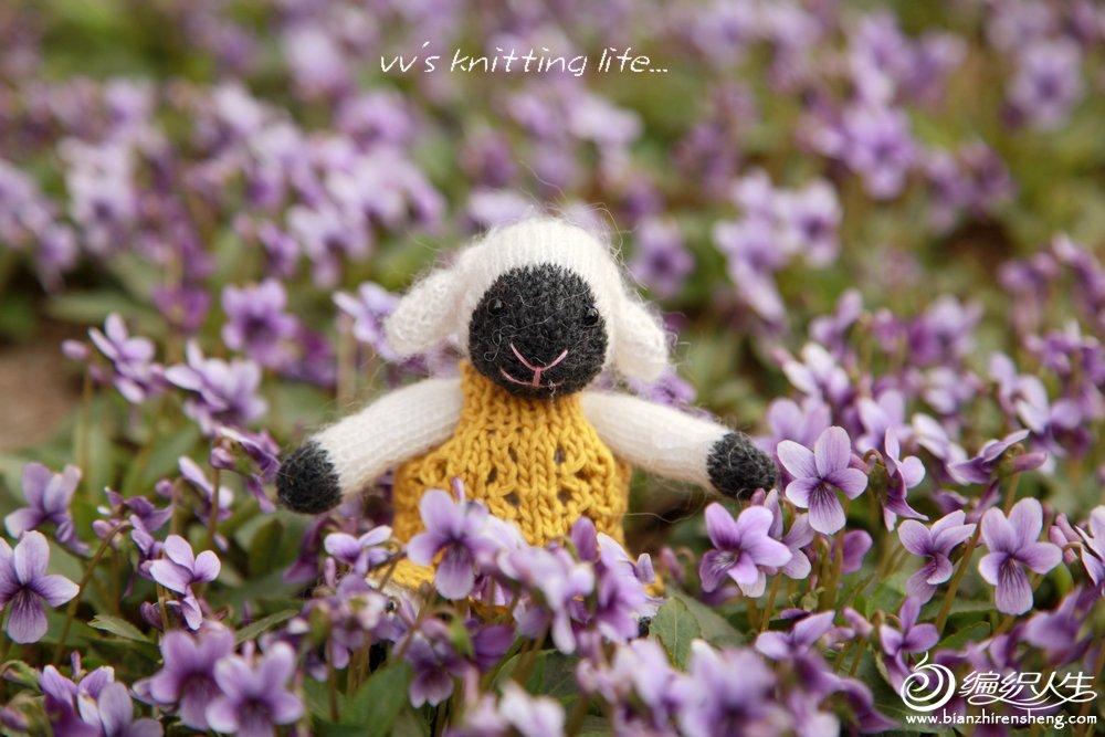 紫丁花萌羊羊