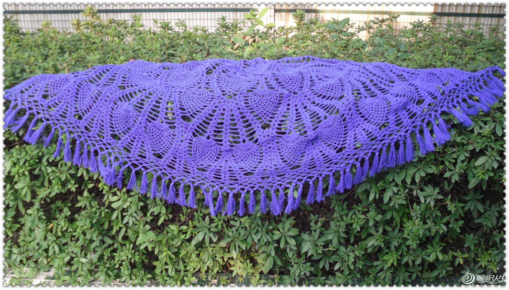 紫翼3.jpg