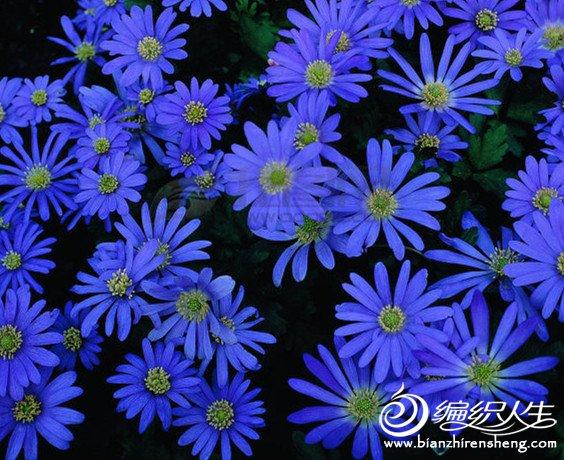 手绘蓝色小花图案