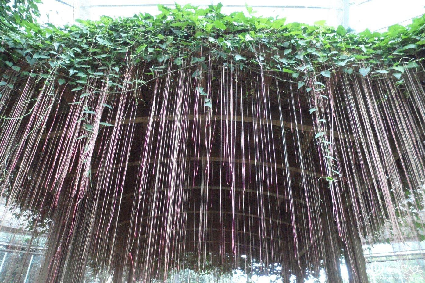 壁纸 风景 植物 桌面 1394_928