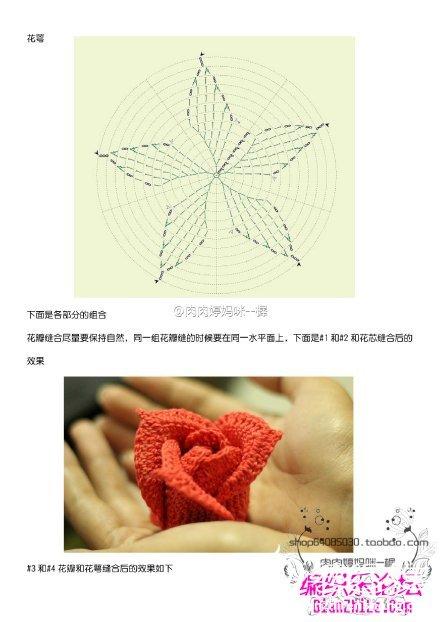 玫瑰花5.jpg
