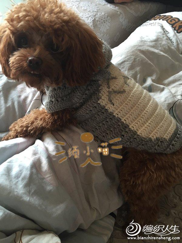 宠物毛衣之狗狗龙猫款钩针带帽毛衣-编织教程-编织人生