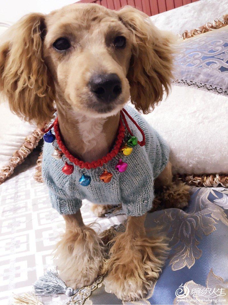 宠物狗毛衣