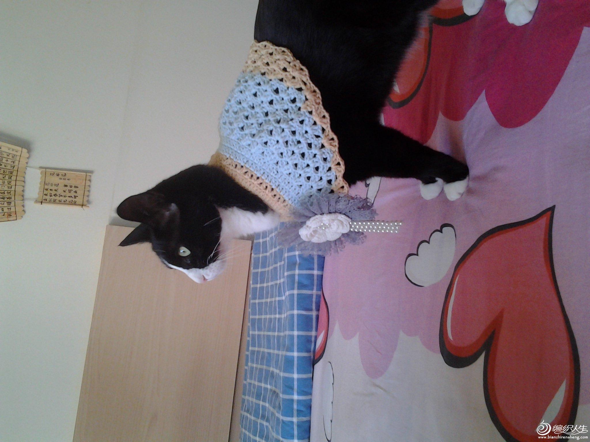 宠物编织服饰