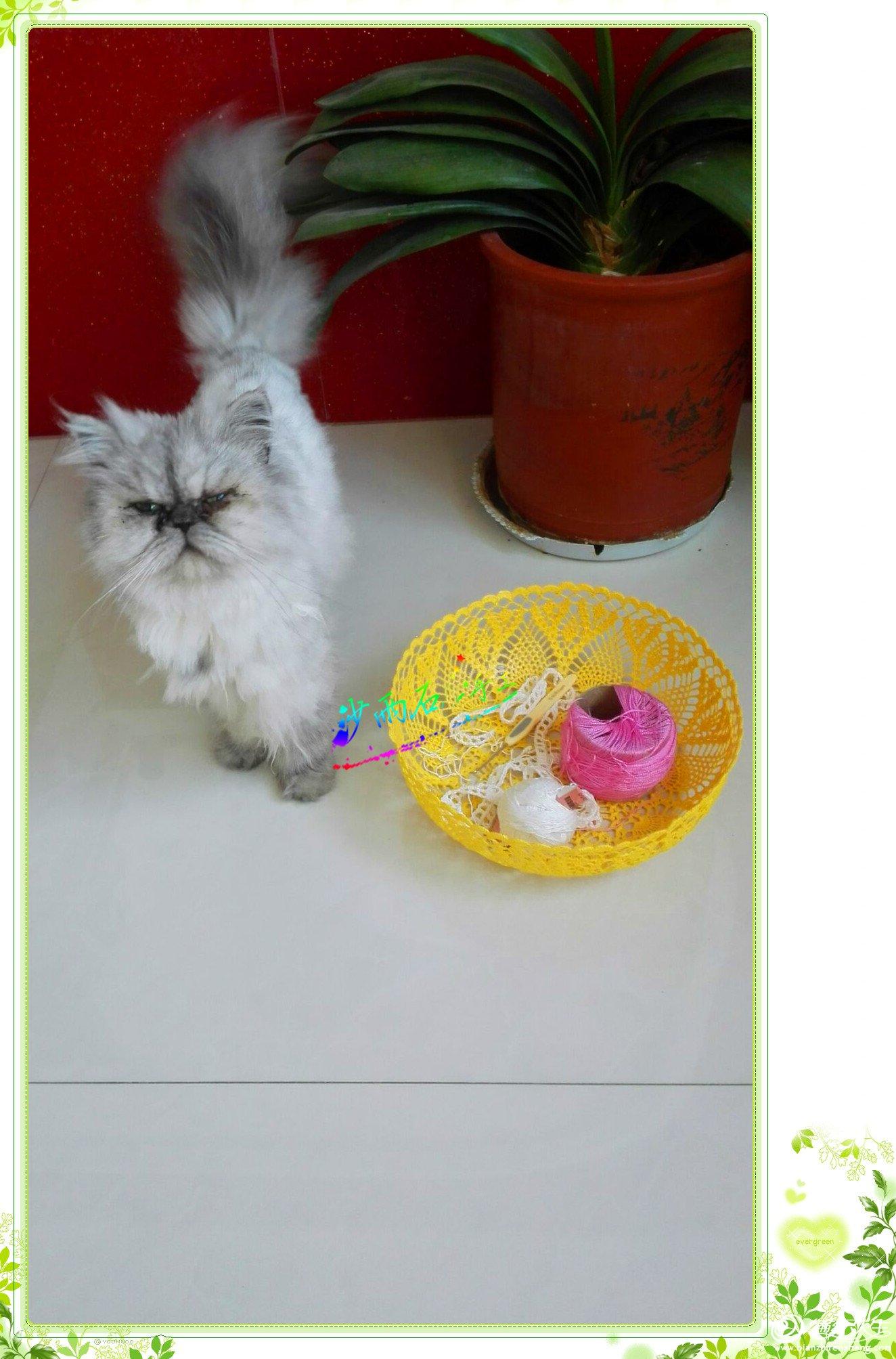 钩针蕾丝碗