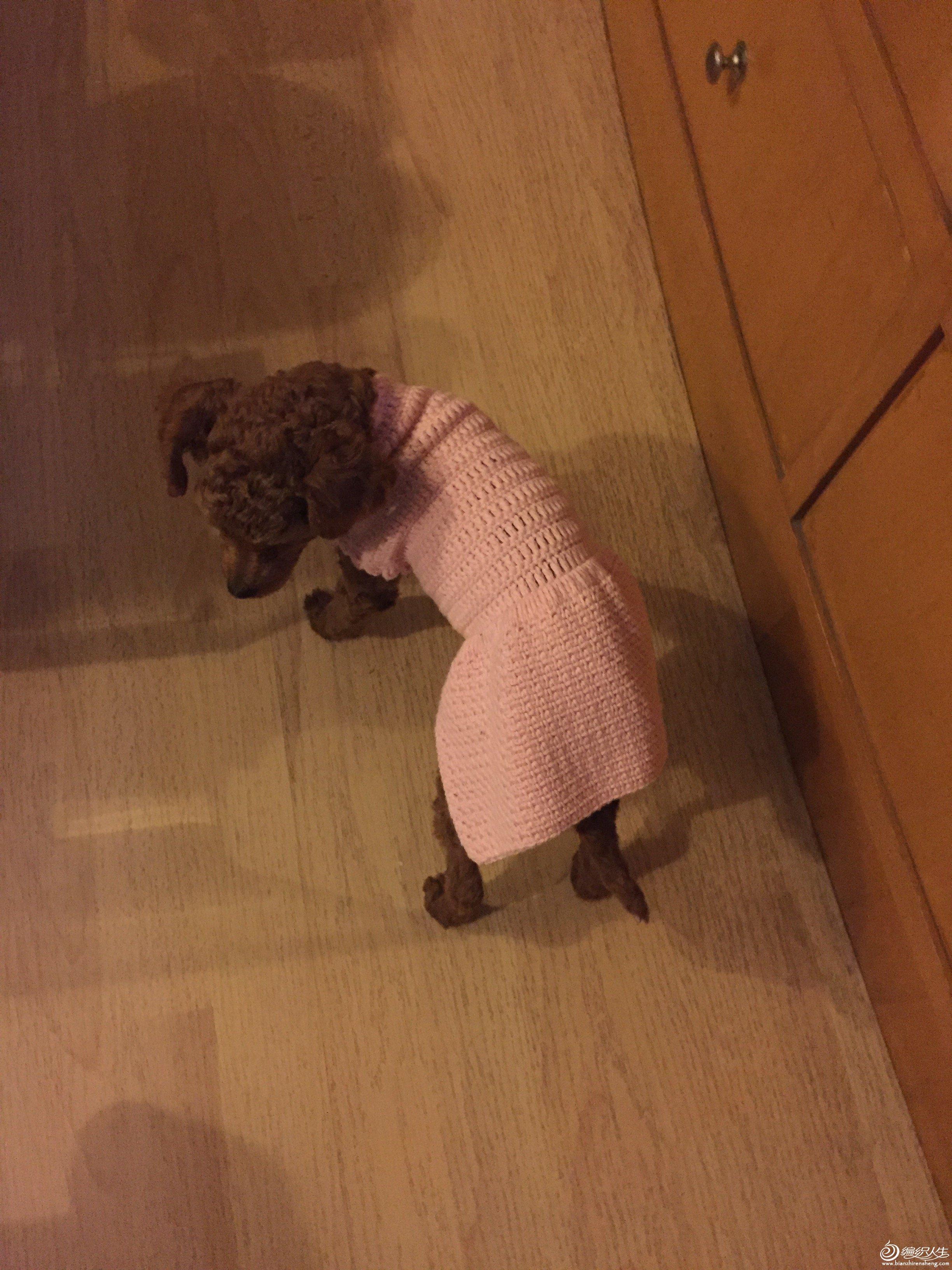狗狗毛线裙