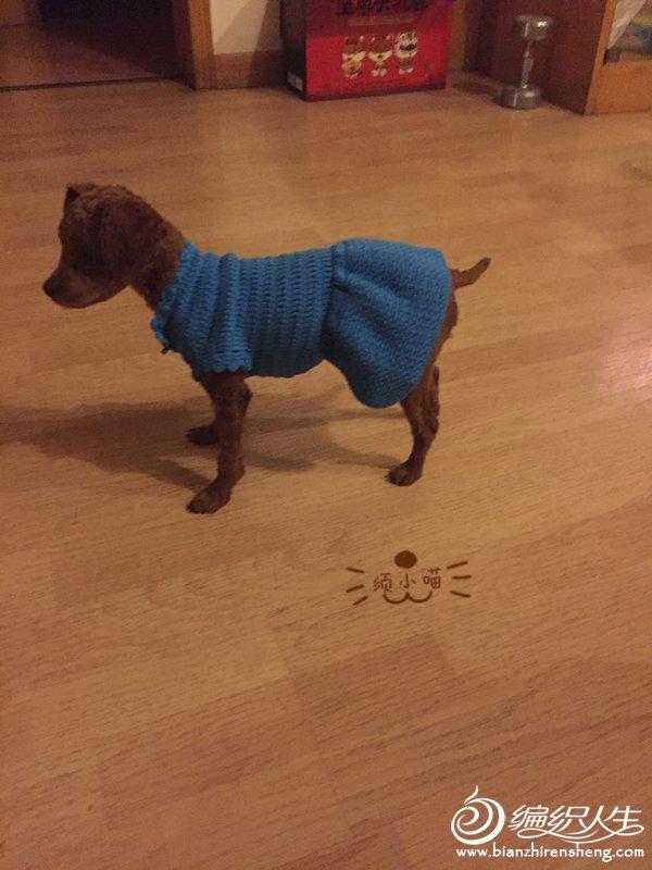 钩针宠物毛衣
