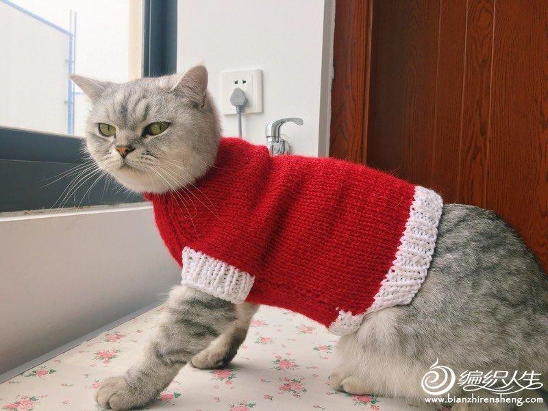 宠物毛衣编织