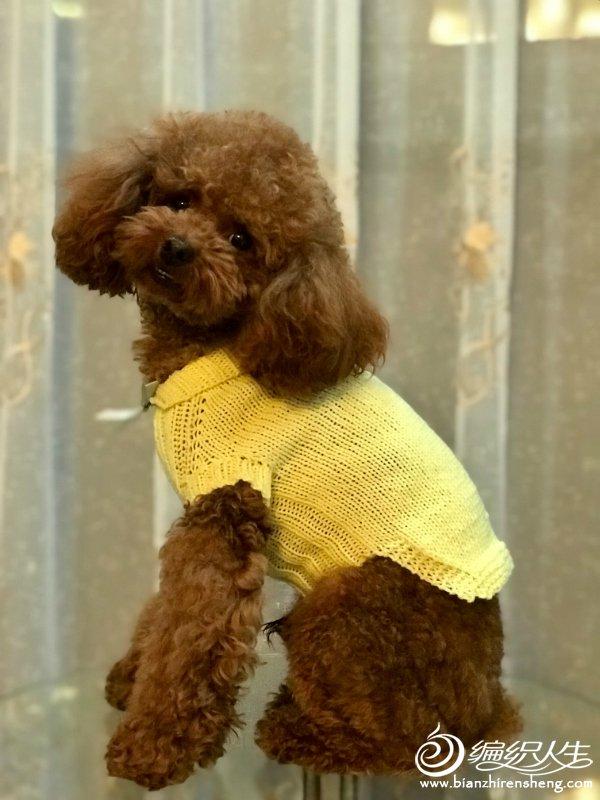 宠物毛衣织法