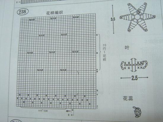 DSC02339-1.jpg
