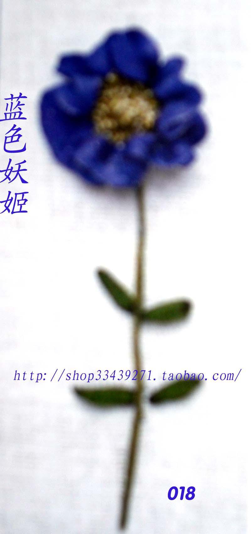CIMG1108.jpg