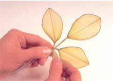 17. 将叶子以3片为一组,组合起来,中间叶片较长,约长