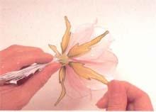 16. 加入5片花托(平均分布在花朵的基部周围)。