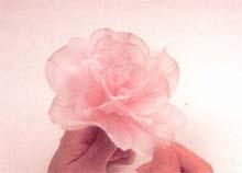 14. 再加4片花瓣于图13的基部周围,花瓣可以略微张开。