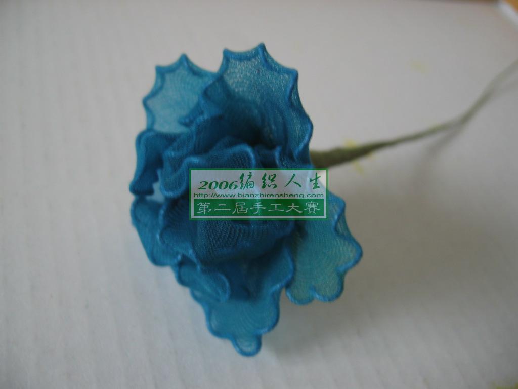 一朵漂亮的蓝色康乃馨