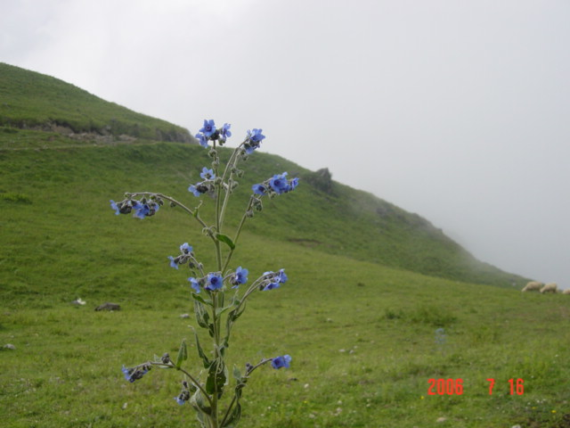 这些都是那个贫困山区一坐海拨2000多米的马楠山上的美景