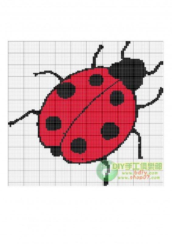 瓢虫.jpg