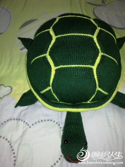 乌龟.jpg