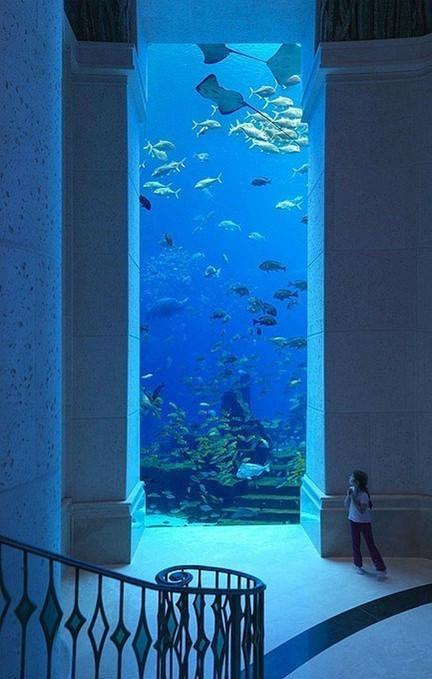 迪拜的海底世界