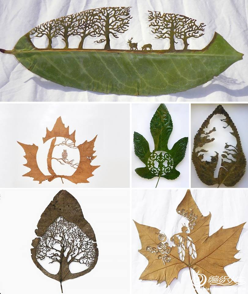 extraordinary-leaf-artwork-by-lorenzo-duran-7.jpg